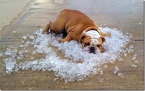 dog in ice bath