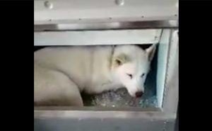 fox in an ice machine