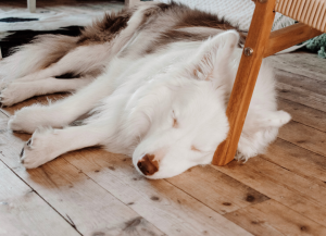 dog sleeping soundly to quiet pearl ice machine